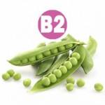 B2 (Рибофлавин) Важный элемент участвующий в процессах обмена веществ в организме