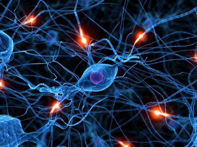 Нервная система и витамин B