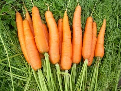 Полезные свойства моркови и витамины