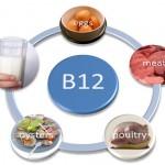 Продукты животного происхождения как основной источник витамина В12