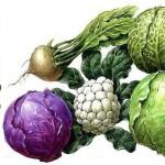 Узнайте какие витамины и питательные вещества содержатся  в различных сортах капусты