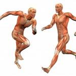 Витамины для восстановления мышц, сухожилий и связок