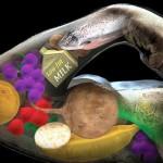 О витаминах и минералах для увеличения мышечной массы